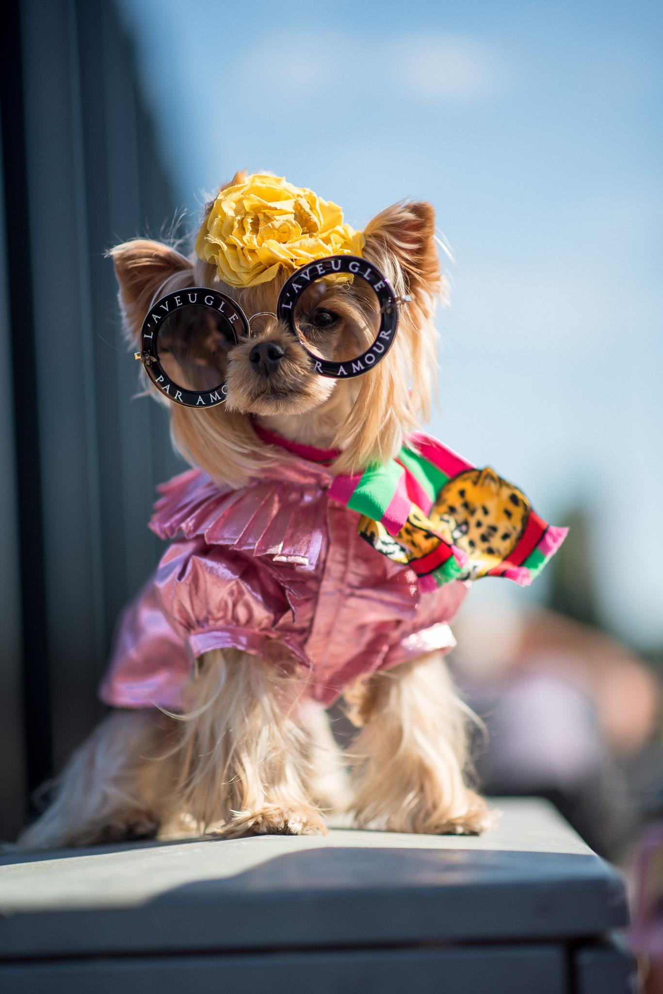Little Lola Sunshine Gucci Milan Fashion Week September 2017 Photography Annika Lagerqvist www.annikasomething.com